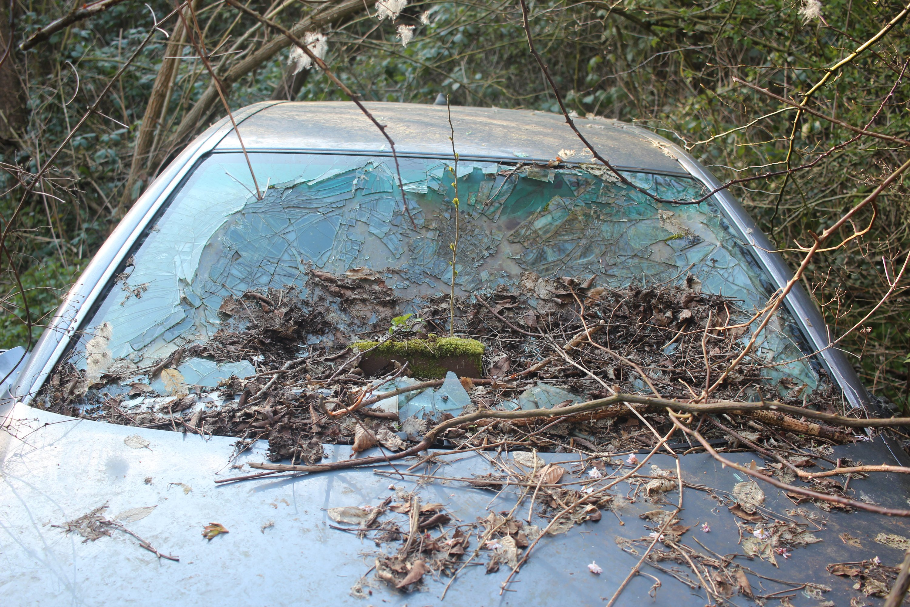 art photo greenhouse nature abandoned urbex degree photography crash car alfa romeo